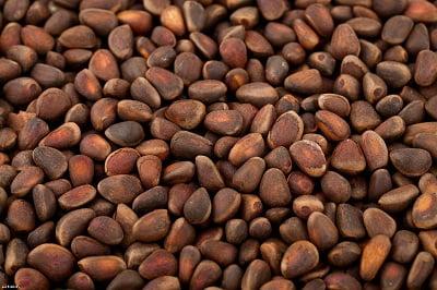 Кедровые орехи: польза и вред для здоровья человека