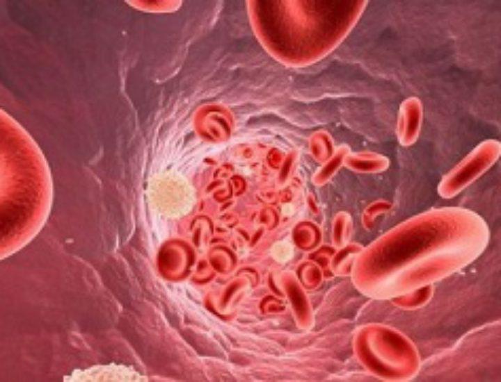 Норма лейкоцитов в крови у женщин